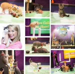 第二屆的貓咪超級盃(Kitten Bowl)同樣引人注意。(圖片擷取自「Kitten Bowl」臉書)