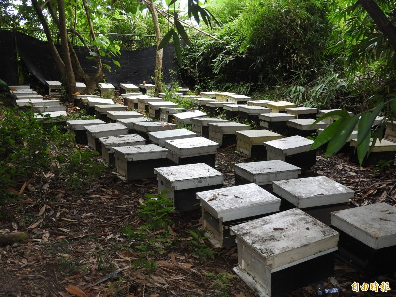 蜂農驚覺蜜蜂大量死亡,趕緊將蜂箱移至郊區竹林,再選擇遷往較安全的山區。(資料照,記者佟振國攝)