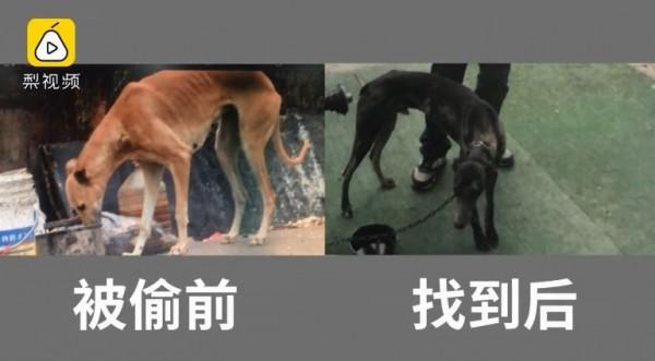 吳男怕被飼主發現,竟將偷來的黃狗用染髮劑染成黑色。(圖擷自梨視頻)