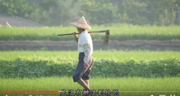 通霄老農新困擾。(圖擷取YouTobe重返里山影片)