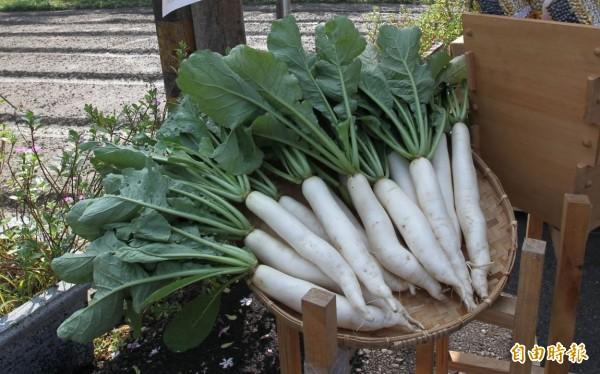 白玉蘿蔔近年在高雄市政府協助推廣下,已成為美濃在地特產之一。(資料照)