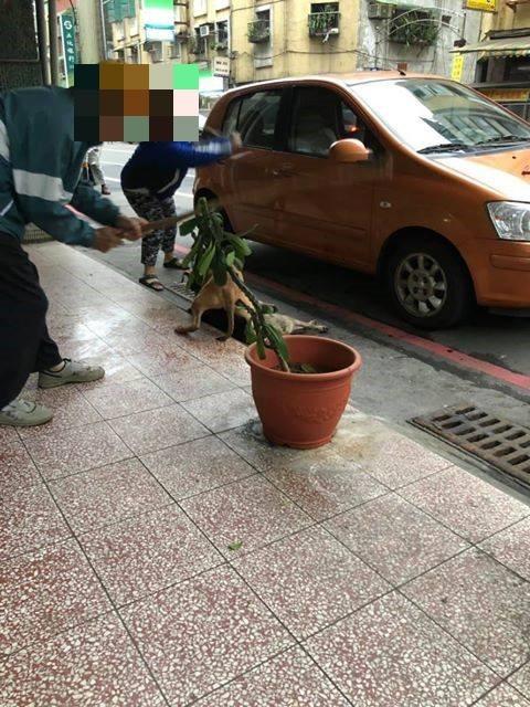 附近民眾試圖救流浪狗。(圖翻攝自基隆人踹共臉書粉專)