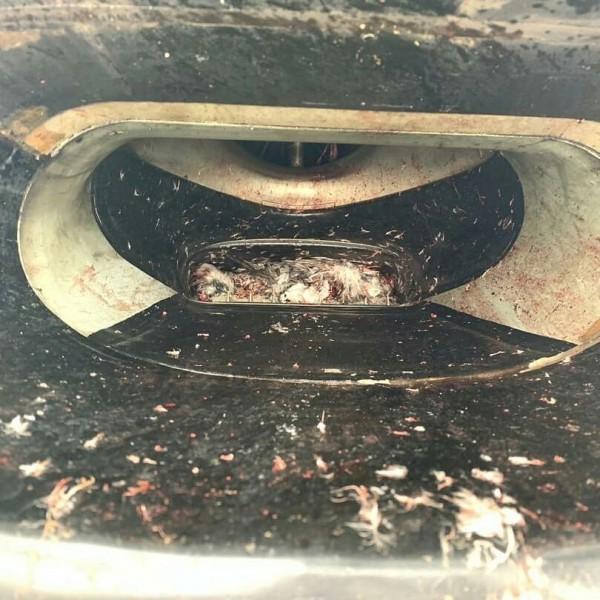 飛機的進氣道內也卡了鳥屍。(圖取自Aviation Tanzania臉書專頁)