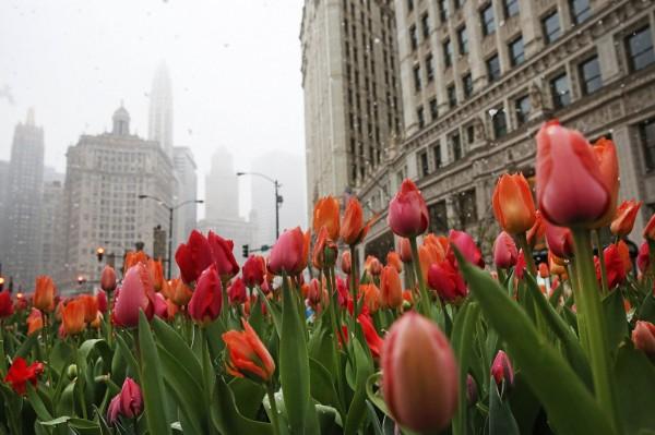 26日芝加哥還有氣溫約在攝氏17度,隔天,溫度就驟降到攝氏零下1度。(法新社)