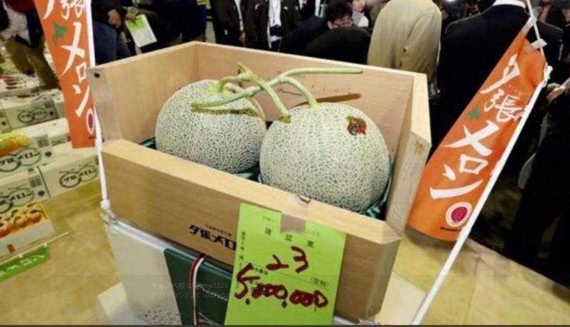 北海道代表性的奢侈名品「夕張哈密瓜」今天舉行年度首拍,最頂級的哈密瓜以2顆500萬日圓的天價成交。(擷取自推特)