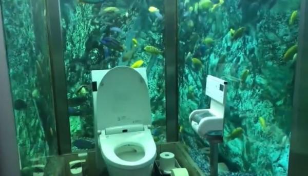 日本兵庫縣有間餐廳將廁所打造成水族館,吸引許多民眾朝聖。(圖擷取自推特@kwsmtkm_0429)