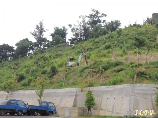 覆鼎金公墓遷葬進度順利,圖中山坡已完成遷葬並進行植栽。(資料照,記者王榮祥攝)