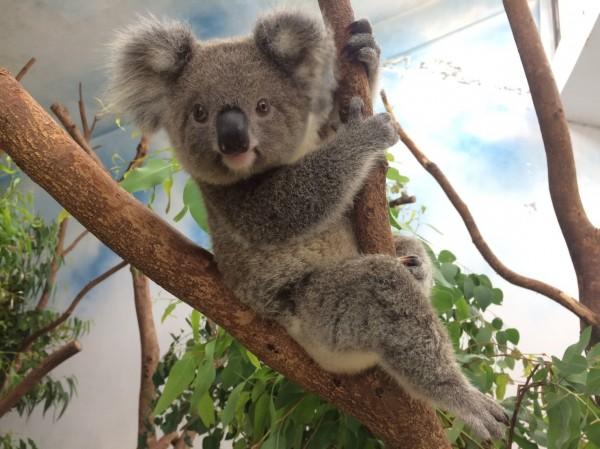 有媒體報導指出,傳出台北市長柯文哲要求動物園調整票價,取消退休公教人員免費入園與軍警人員半價入園的優惠。(北市動物園提供)