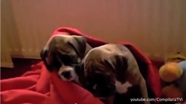 咱哥倆就是感情好,連杜咕都要在一起。(設計對白)(圖擷取自youtube)