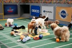 認真搶球的狗狗們。(圖片擷取自《ABC)