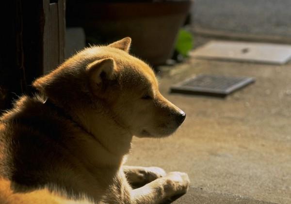 最近中國雲南省文山市頒布新規,禁止市民在白天遛狗,讓市民相當傻眼。(情境照)