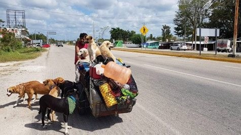 墨西哥一位大叔騎著三輪車在各地遊走,順便沿路幫助受傷的狗狗。(圖擷自臉書)