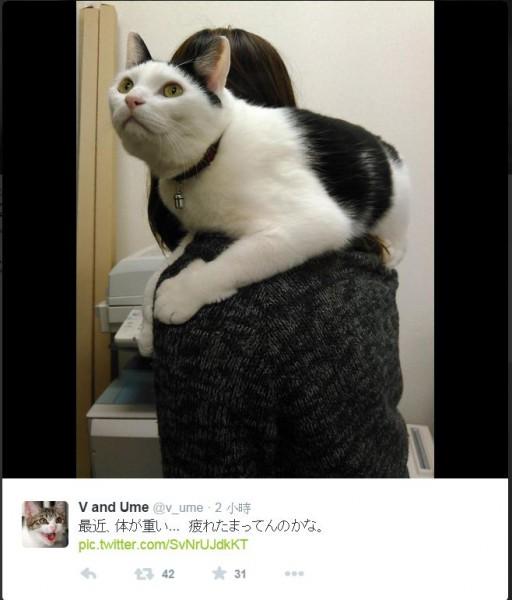 公司員工與貓咪的互動。(照片擷取自推特)