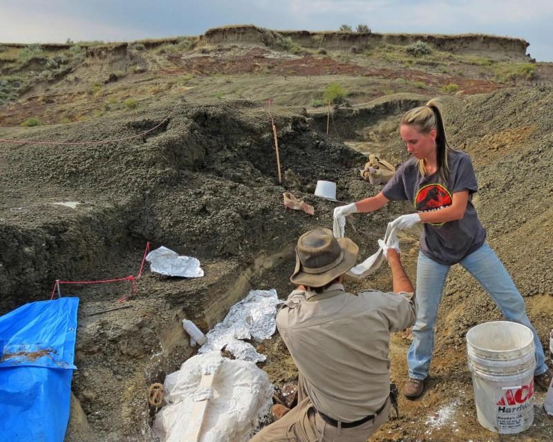 北達科他州的白堊紀末期地層中,發現了許多重疊並排的古代鱘魚與植物化石。(法新社)