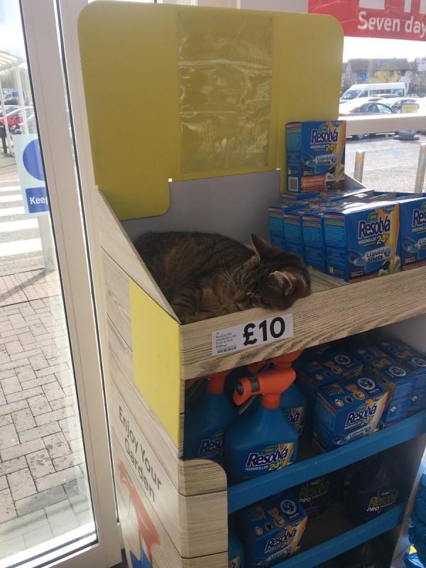 一位網友在英國一家超市架上發現一隻小貓。(圖擷自推特)