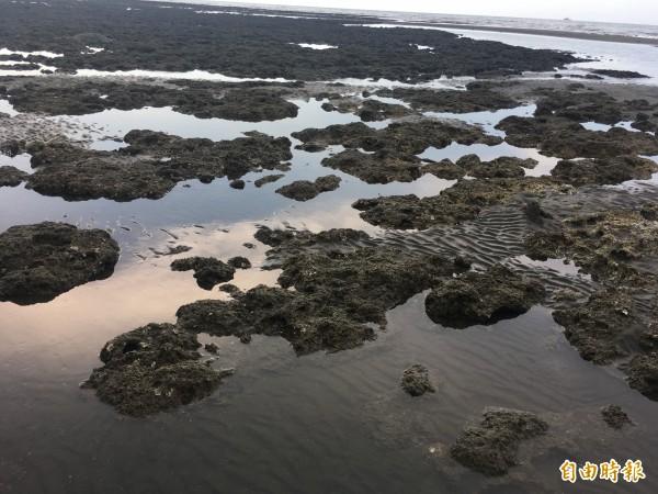 中油第三接收站預定地裸露藻礁。(資料照)