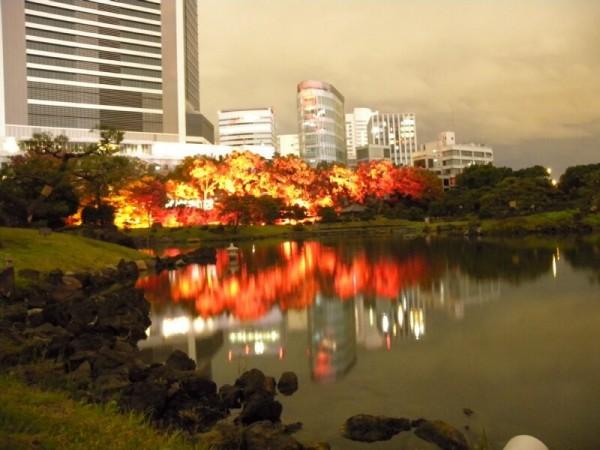 日本觀光勝地在紅葉林裡面「打燈」,看起來卻很像森林大火。(圖擷自推特)