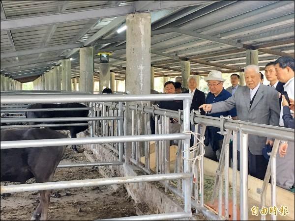 李登輝培育和牛成功,取名「源興牛」。圖為李前總統前去視察牛隻。(資料照,記者花孟璟攝)