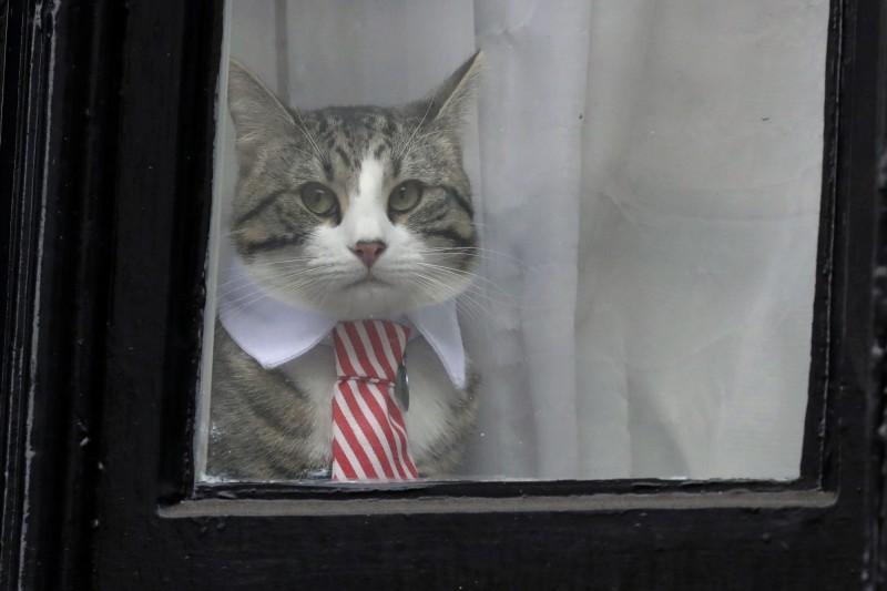 亞桑傑被逮捕一事傳開後,Twitter上卻有許多網友反而比較關心他飼養的貓咪安危。(美聯社)