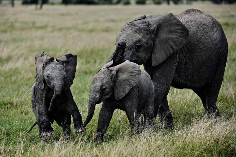 由於人類活動增加破壞動物棲地,過去50年內,全球野生動物數量下降68%。(法新社資料照)