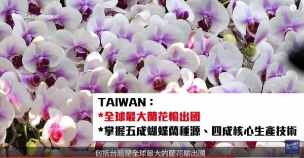 台灣是最大蘭花輸出國。(圖擷取自YouTube)
