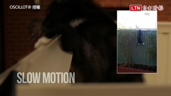 澳洲有人發明了貓狗防逃裝置,至今竟沒有任何貓狗成功逃脫。(圖片由Oscillot授權使用)