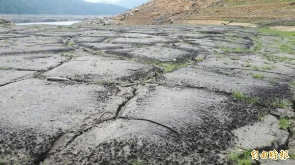 石門水庫上游集水區因水位下降,原被蓄水覆蓋的區域呈現乾涸景象,甚至已經長出綠草。(記者李容萍攝)