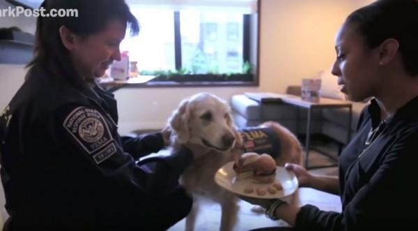 飯店人員特地為牠準備給狗狗吃的漢堡。(圖擷自YouTube)