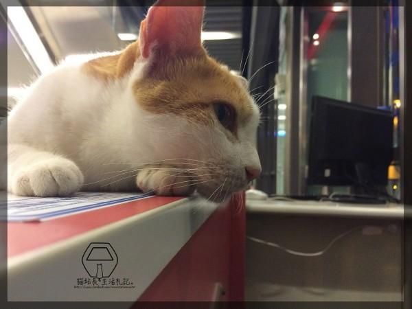 流浪貓咪咪近日升官為貓纜站長(圖擷取自「貓站長的生活札記臉書」粉絲團)