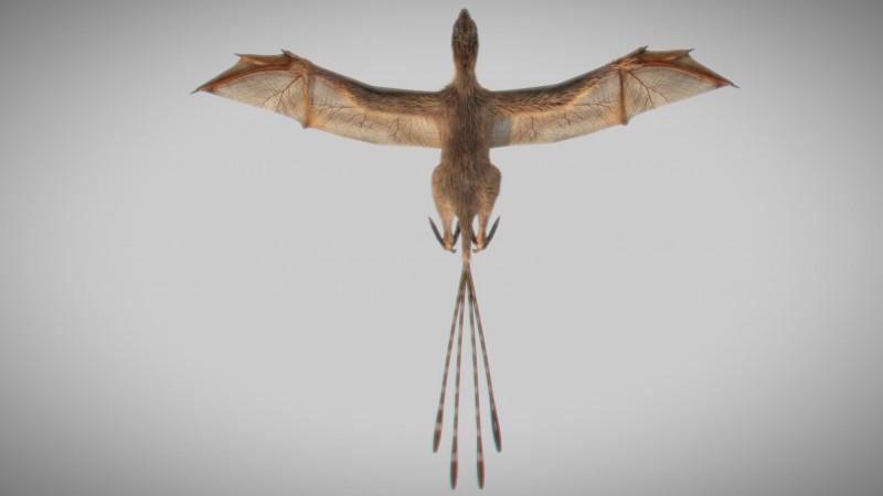 Ambopteryx longibrachium展翅模擬圖。(路透)