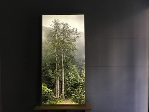 皮爾斯所成立的「樹木計畫」(The Tree Projects),以水平視角擷取樹木每公尺高的圖像,再利用數位合成,製作出「等身照」。(中央社)
