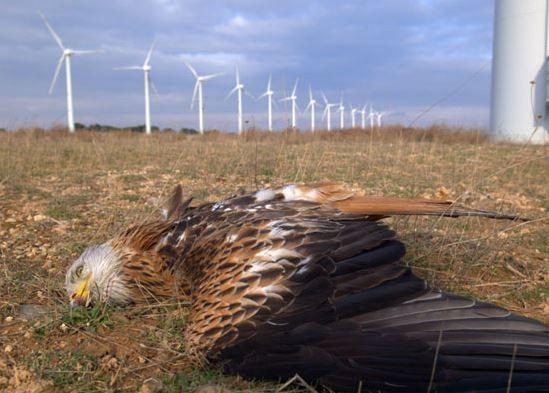 研究指出,風力發電廠降低該地猛禽類的數目,對當地的食物鍊產生衝擊。(圖取自網路)