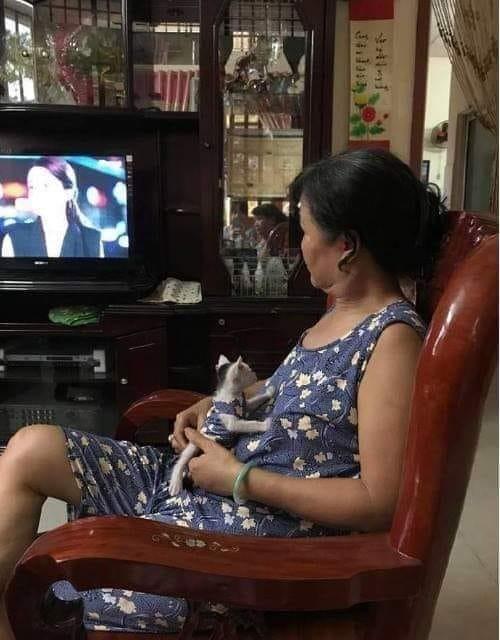 原PO的阿嬤特地幫小貓咪做了親子裝,網友看了笑稱,「原PO被邊緣了...」(圖擷取自臉書社團「爆廢公社」)