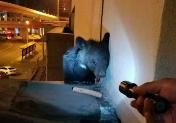 該建物3樓住戶張建發現了小黑熊僅以爪子攀附於外牆上。(擷取自《新文化網》)