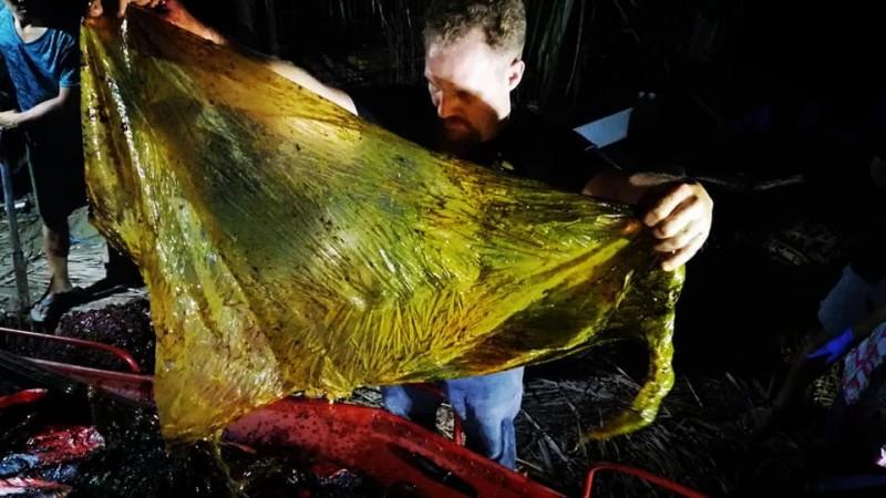 工作人員在喙鯨胃中發現大量塑膠袋。(圖取自大型動物骨頭博物館臉書)