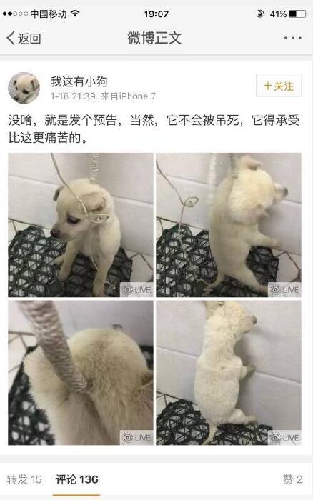狗狗先被吊起來。(取自網路)