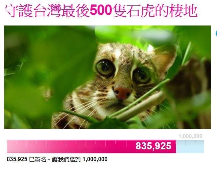 「守護台灣最後500隻石虎的棲地」網路聯署,已突破80萬人。(記者鄭名翔翻攝)