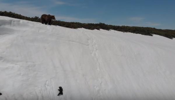 母熊已經爬上高處,小熊不斷滑落,仍努力要爬上山頂。(圖擷自Youtube)