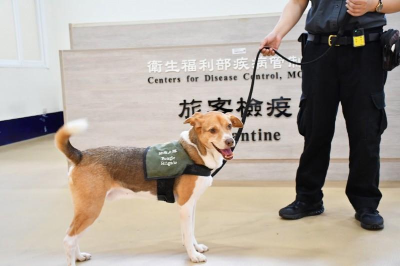 被暱稱為「護國神犬」的防疫犬們認真值勤的照片,讓網友們歪樓表示,「好可愛哦!」。(圖取自海洋委員會臉書粉絲專頁)