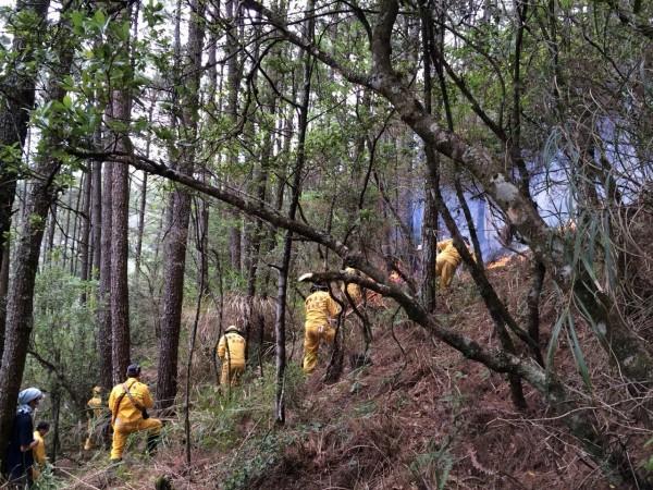 林務局森林救火隊在火警現場闢建防火巷,以防火勢延燒太快。(東勢林區管理處提供)