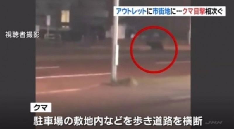 札幌市區一夜傳出7次「熊出沒」通報。(擷取自JNN)