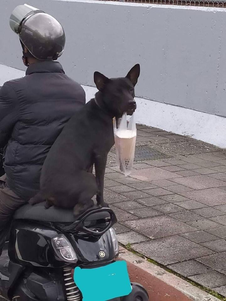臉書上流傳一張照片,描述一隻漂亮的黑色狗狗坐在機車後座上,嘴裡還替牠最好的朋友叼著一杯珍珠奶茶,令網友紛紛留言「太厲害了吧」、「狗狗掛勾」等。(圖擷取自臉書)