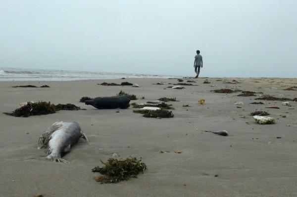 越南中部海岸日前出現數百萬條魚暴斃後被沖上岸,越南民眾認為,這可能與台塑越南河靜鋼廠排放有毒物質有關。(法新社,資料照)
