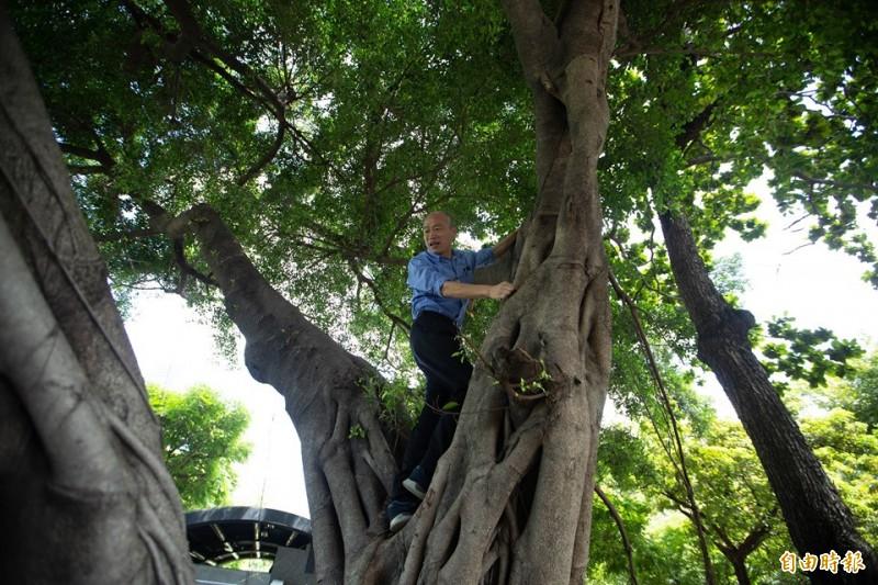 韓國瑜今天爬到樹上看樹洞。(記者黃旭磊攝)