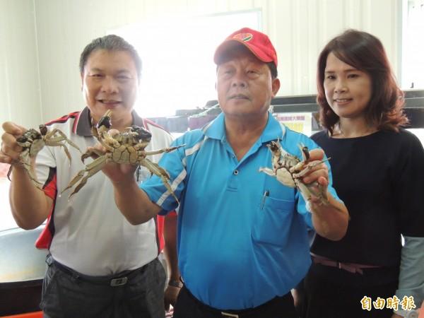 中國河蟹外逃,台灣將可能爆發一場河蟹大戰。圖為前苗栗縣長劉政鴻大力推廣引進大閘蟹。(資料照,記者蔡政珉攝)