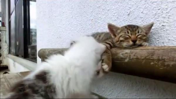 「快點起來嘛!睡死了喔!」(設計對白)(圖擷取自臉書)