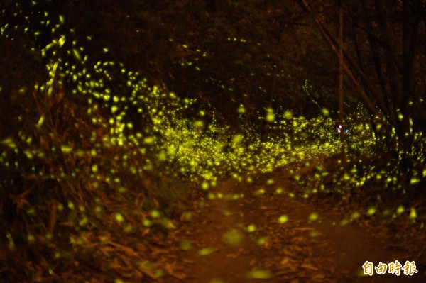 螢火蟲季節。(資料照,記者張忠義攝)