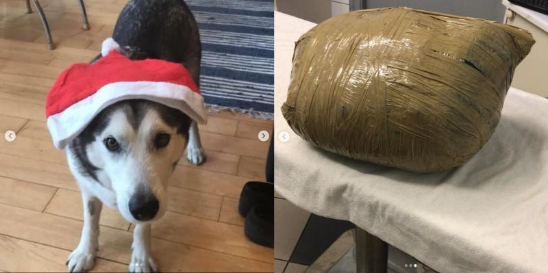 英國有名女子日前出國旅遊,她在出國前將愛犬寄宿到一間寵物旅館,不料當她回國要接回自己的愛犬時,才被告知愛犬已經死亡,更誇張的是愛犬的遺體竟被使用黃色膠帶捆包成一個密封包裹的模樣。(圖擷自IG,本報合成)
