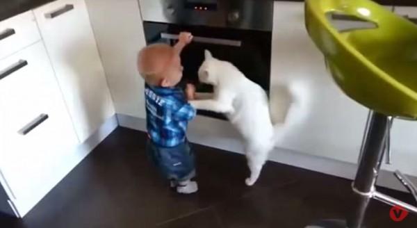最後成功讓小男童遠離烤箱,讓網友紛紛響應,直呼「要請牠來當小管家」。(圖擷取自YouTube)