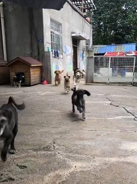屋內陸續有狗出門迎接他。(圖擷自爆廢公社二館)